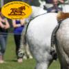 Woodbridge Horse Show 2013